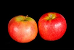 Compra Fruta de Temporada   MANZANA CRISPPS PINK   FrutasNieves