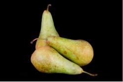 Compra Fruta de Temporada | PERA CONFERENCIA II | FrutasNieves