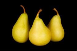 Compra Fruta de Temporada | PERA ERCOLINI I | FrutasNieves