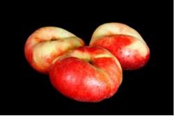 Compra Fruta de Temporada | PARAGUAYO PLATERINA I | FrutasNieves