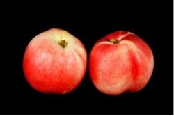 Compra Fruta de Temporada | NECTARINA BLANCA | FrutasNieves