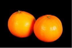 Compra Fruta de Temporada   NARANJA DE MESA DE IMPORTACION   FrutasNieves