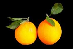 Compra Fruta de Temporada | NARANJA DE HOJA | FrutasNieves