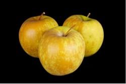 Compra Fruta de Temporada | MANZANA GOLDEN ROSSETTI | FrutasNieves