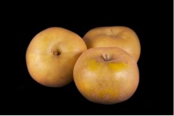 Compra Fruta de Temporada | MANZANA CANADA GRIS | FrutasNieves