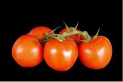 Compra Verdura, Hortalizas de Temporada | TOMATE RAMA EXTRA | FrutasNieves