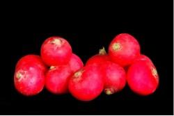 Compra Verdura, Hortalizas de Temporada | RABANITOS | FrutasNieves