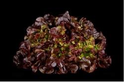 Compra Verdura, Hortalizas de Temporada | LECHUGA HOJA DE ROBLE | FrutasNieves