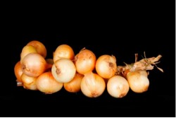 Compra Verdura, Hortalizas de Temporada   RISTRA DE CEBOLLAS   FrutasNieves