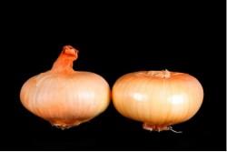 Compra Verdura, Hortalizas de Temporada | CEBOLLAS PAIS | FrutasNieves