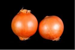 Compra Verdura, Hortalizas de Temporada | CEBOLLAS | FrutasNieves