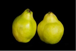 Compra Fruta de Temporada | MEMBRILLO | FrutasNieves
