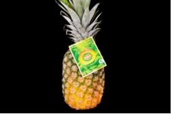 Compra Fruta de Temporada | PIÑA DEL MONTE | FrutasNieves
