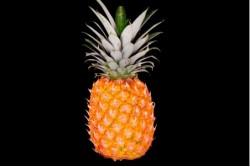Compra Fruta de Temporada | PIÑA DE AVION | FrutasNieves