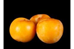Compra Fruta de Temporada | CIRUELA BRONTOSAURIO | FrutasNieves