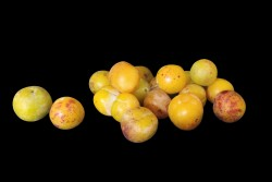 Compra Fruta de Temporada | MIRABELES | FrutasNieves