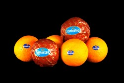 Compra Fruta de Temporada | NARANJA FONTESTAD | FrutasNieves