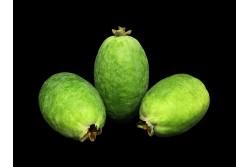 Compra Fruta de Temporada   FEIJOAS   FrutasNieves