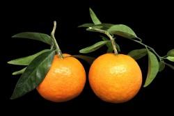 Compra Fruta de Temporada | CLEMENTINA DE HOJA EXTRA | FrutasNieves