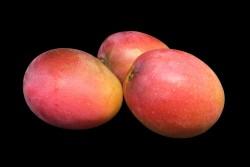 Compra Fruta de Temporada   MANGO TROPICAL   FrutasNieves